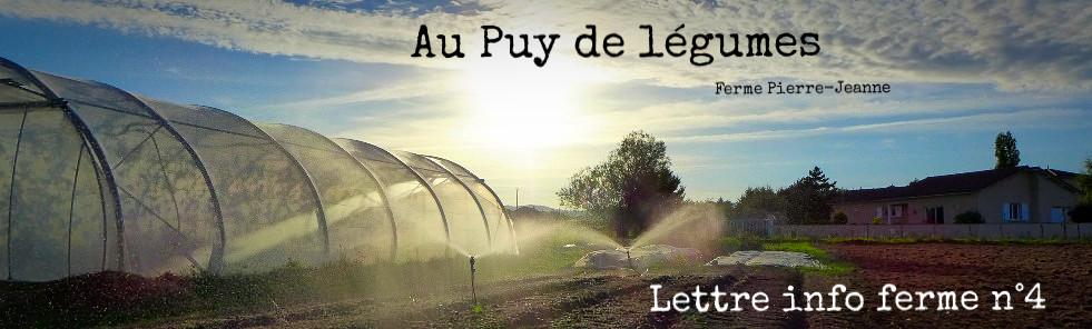 Au Puy de légumes - Ferme Pierre-Jeanne - Nouvelles n°4